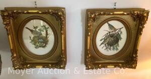 "Pair of Decorative Gold-framed Bird Pictures, overall size: 15""t x 13""w, plaster frames"