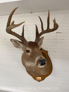 Large 9 Point Deer Mount, Dated 1994