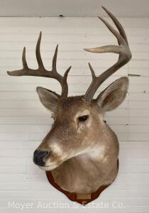 10 Point Deer Mount, Dated 1990
