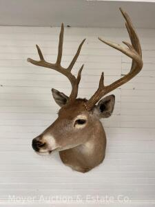 11 Point Deer Mount, Dated 1991