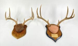 Pair of Antler Only Deer Mounts, Both 8 Points